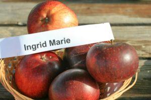 Ingrid Marie