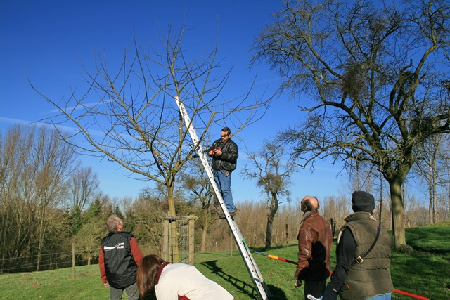 Snoeilessen hoogstam fruitbomen