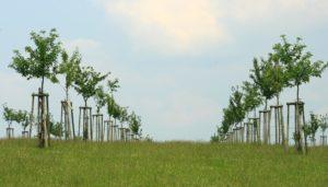 Jonge boomgaard