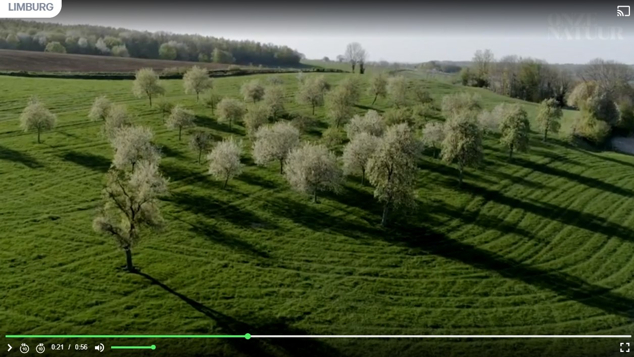 Prachtige luchtbeelden van bloeiende fruitbomen in de Voerstreek